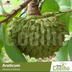 Araticum