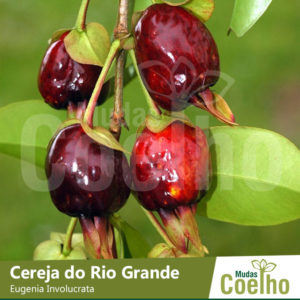 Cereja do Rio Grande