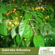Gabiroba Arbustiva