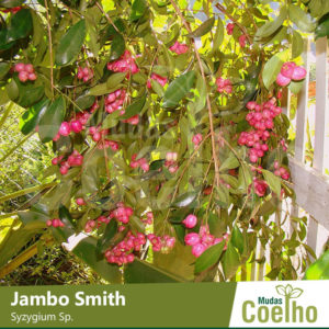 Jambo Smith