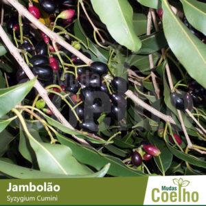 Jambolão