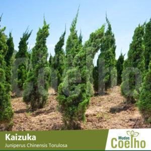 Kaizuka