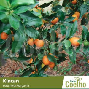 Kincan