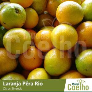 Laranja Pêra Rio