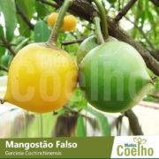 Mangostão Falso