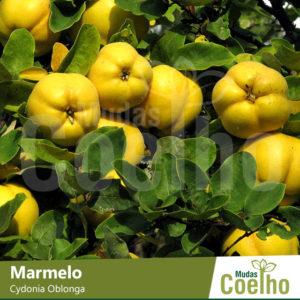 Marmelo