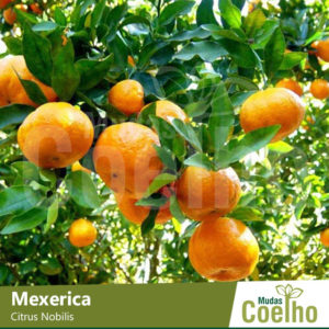 Mexerica